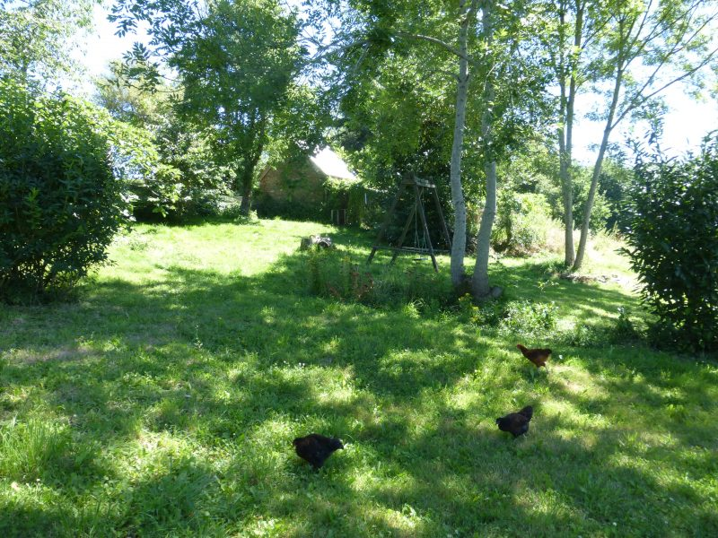 permaculture poules